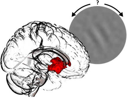 Participants perform a visual learning task: their level of confidence regarding the orientation of a particular stimulus activates a specific area within the brain's limbic system. Copyright Charité.